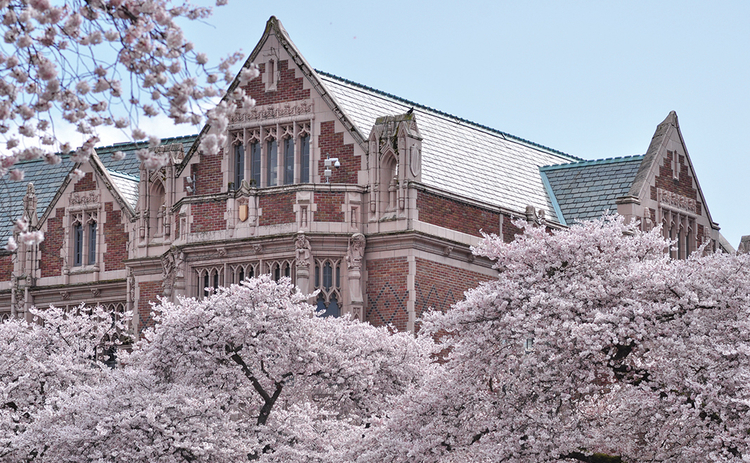 QUANT 32 University_of_Washington_Quad_cherry_blossoms_2017-20-web.jpg