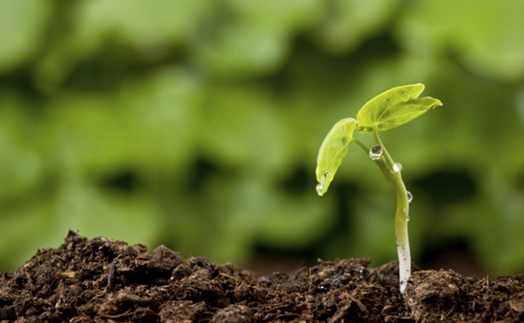 Growing returns on green investments