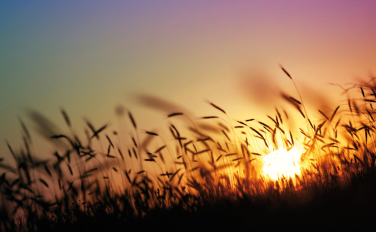 A new dawn for soft commodities such as wheat