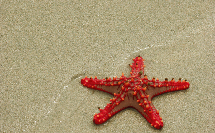 red-starfish-on-sandy-background