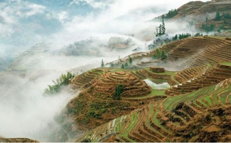 china-ricefields