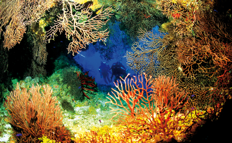 diving-in-ghost-mountain-cayman-islands-with-variety-corals