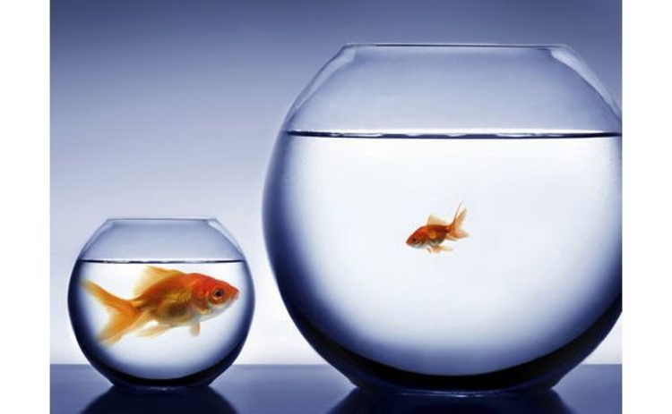 two-goldfish-in-bowls-of-water-big-fish-in-small-bowl-vice-versa