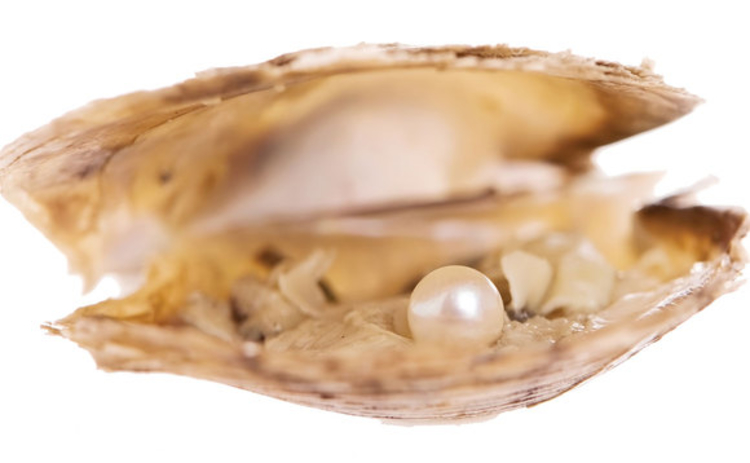 emerging-oyster