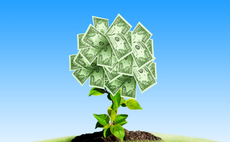 growth-plant-sprout-dollars-money